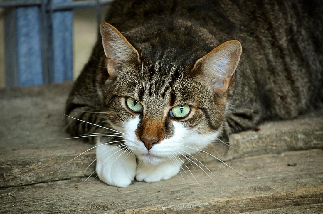 Penyakit yang Bisa Ditularkan Kucing Pada Manusia