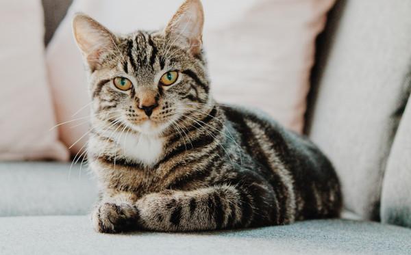 Penanganan Tepat Ketika Kucing-mu Sedang Hamil