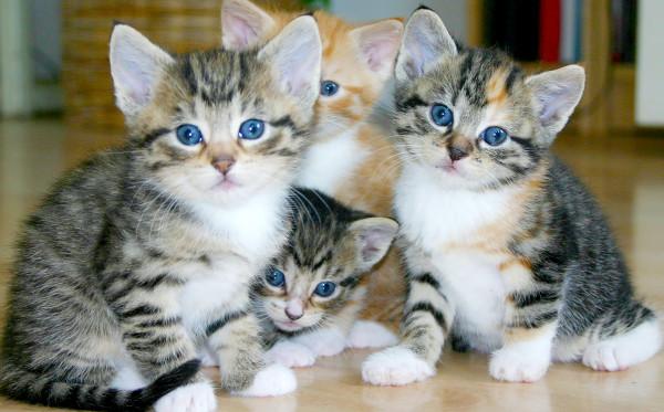 Kenali Pertumbuhan Anak Kucing,Yuk!