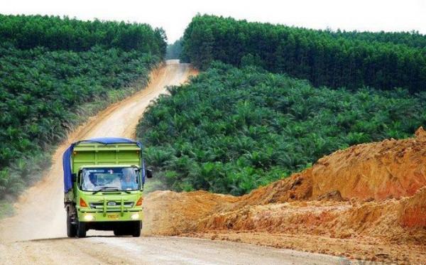 Tingkatkan Ekonomi Kaltim, Pemprov Dorong Kolaborasi Sektor Perkebunan