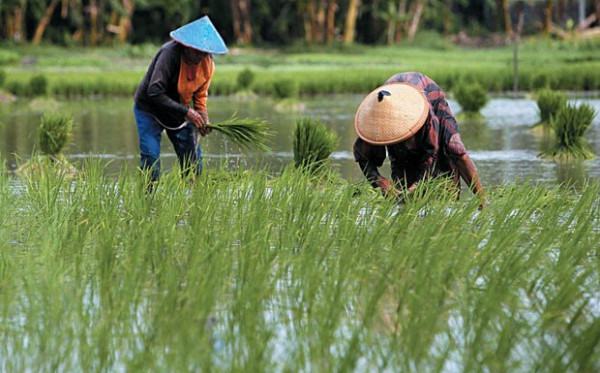 Kemnaker dan Kutai Kartanegara Bersinergi Wujudkan SDM Bidang Pertanian