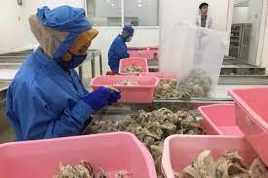 RI Pepet China, Calon Pembeli Sarang Burung Walet Rp16 T