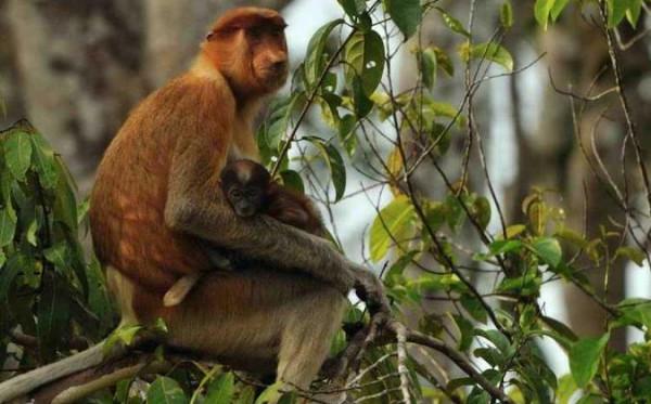 Inventarisir Keanekaragaman Hayati, Balai TNK Temukan Jenis Mangrove Langka