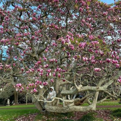 Diary of Auckland : Perempuan dan Magnolia