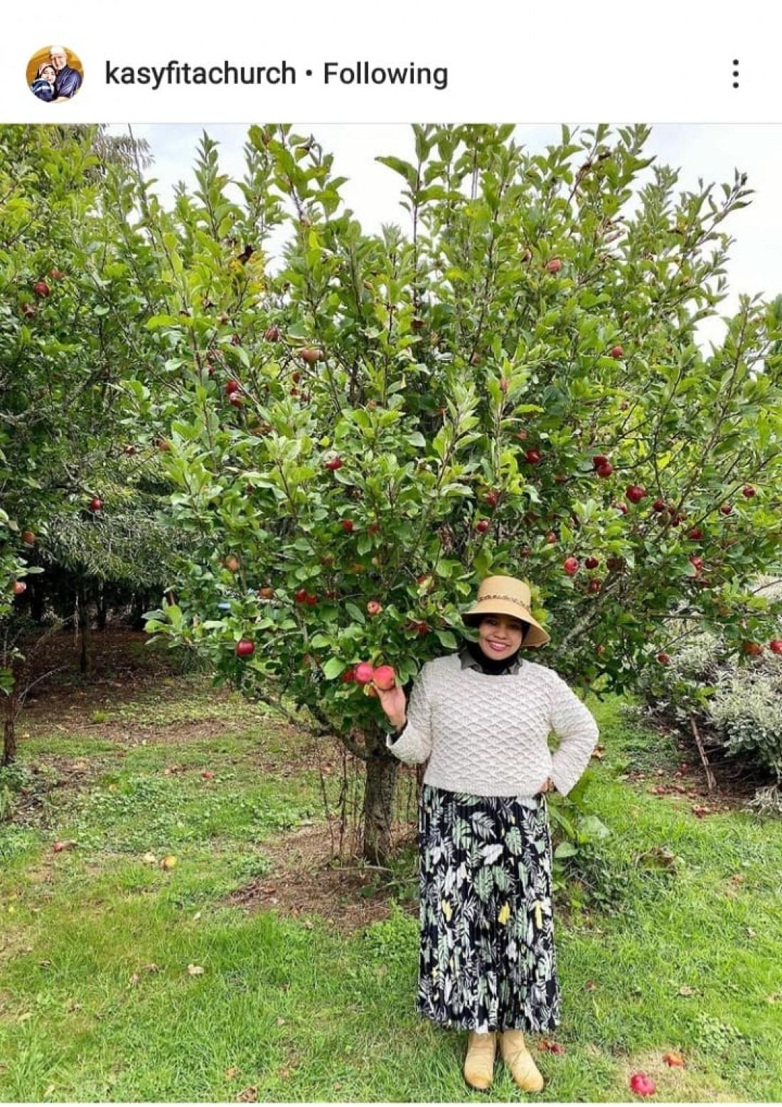 Makan Apel Gratis, Tuh Apelnya Banyak yang Jatuh Sendiri