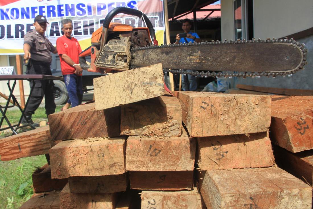 Gakkum KLHK Gagalkan Peredaran Kayu Ilegal Antaprovinsi Sulawesi